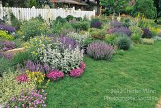 by Denver garden expert Tom Peace, the garden belonging to Ann Weckbaugh features drought tolerant perennials and tough buffalo grass lawn.  Dianthus, stachys, salvia, verbena, verbascum, yarrow, nepeta, eremurus