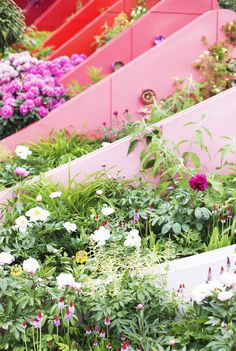 Summer Flowers In The Home With M&S | pink ombre garden