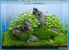 Оформление аквариума / Акваскейп | подборка фотографий | стр 1