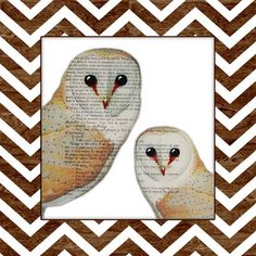 Obvious Place Two Owls Chevron Graphic Art on Canvas