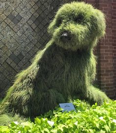 Atlanta botanical gardens shaggy dog topiary - to herd my Jackpot Land Park topiarysBotanical gardens shaggy dog topiary - Who had to look twice to see if it was a real dog (Atlanta Park)Atlanta botanical gardens shaggy dog topiary - looks like a real dog Topiary Plants, Topiary Garden, Topiaries, Garden Deco, Garden Art, Garden Design, My Secret Garden, Outdoor Art, Lawn And Garden