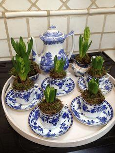 tea pot plant LOVER.