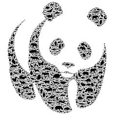 Pandas are not only a national treasure in China but are recognized internationally for their beauty.