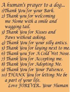 A Prayer to my Dog