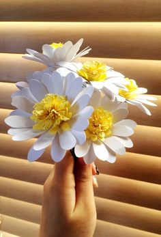 OJB_Paper_Daisies_Final4.JPG                                                                                                                                                                                 More
