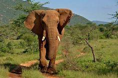 Saruni Samburu, Kenya - on safari