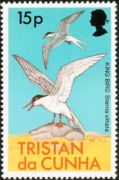 Antarctic Tern stamps - mainly images - gallery format