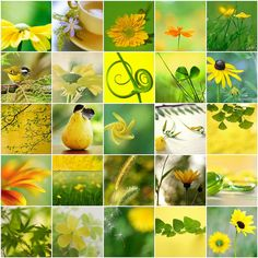 Cheery and Springy by LHDumes, via Flickr