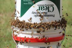 DIY Bee Yard Feeder   VIDEO