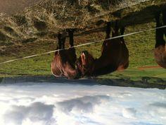 Bonita comunicación. Horses, Animals, Pretty, Paisajes, Animales, Animaux, Horse, Words, Animal