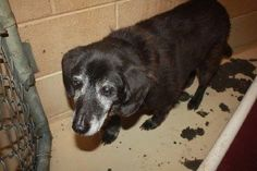 15-year-old dog surrendered to Tennessee animal shelter
