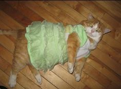 This is what MOST cats look like when you put them in a costume. They retaliate by lying down and REFUSING to move until you take the costume or clothes off of them.