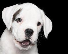 INTERVIEW : Des chiens qui sourient avec Alex Cearns ! | Graine de Photographe The Blog