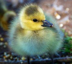 Ducking :-)