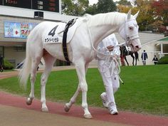 White Vessel - Thoroughbred dominant white stallion, racehorse in Japan The Farm, Thoroughbred Horse, Appaloosa Horses, Horse Photos, Horse Pictures, All The Pretty Horses, Beautiful Horses, Rare Horses, Majestic Horse