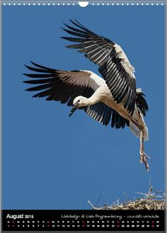 Home - motiv-digital Bald Eagle, Digital, Animals, Pictures, Calendar, Things To Do, Animales, Animaux, Animal