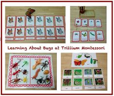 Learning About Bugs - Montessori Bloggers Network