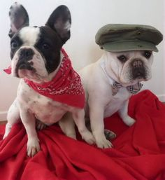 Benny, (r.i.p.10/24/13), and Lilly, French Bulldogs