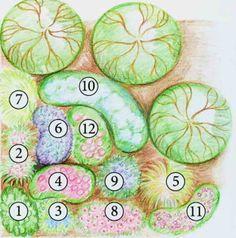 1  (Bergenia х hybrida), сорт Baby Doll; 2(Hemerocallis); 3 (Amsonia tabernaemontana); 4 (Astrantia major), сорт Claret; 5 (Miscanthus sinensis), сорт Malepartus; 6 (Cimicifuga ramosa), сорт Atropurpurea; 7  (Hakonechloa macra); 8(Echinacea purpurea), сорт Magnus; 9   (Veronicastrum virginica), сорт Fascination; 10 (Polygonum polymorpha); 11 (Geranium psilostemon), сорт Patricia; 12  (Eupatorium maculatum), сорт Atropurpureum varianty-tsvetnikov-ot-pita-udolf
