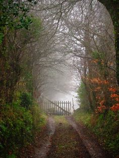 Imagine having a lovely wooded lane leading to your front gate.