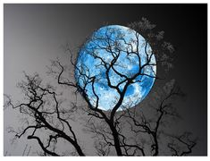 Blue Moon tonight 8-31-2012 The power from the moon transcends time, matter, bringing things like me back to life. #Gargoyle L.B.