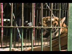 Kassandra | Episodio 8 | Coraima Torres y Olvaldo Rios | Telenovelas RCTV - YouTube Youtube, Animals, Documentaries, Animales, Animaux, Animal, Animais, Youtubers, Youtube Movies