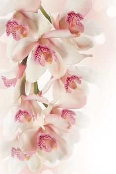 Orchids, I think Good Morning Beautiful Flowers, Amazing Flowers, Pretty Flowers, Pink Orchid Wallpaper, Flower Phone Wallpaper, Pink Orchids, Phalaenopsis Orchid, Patio Plants, Flowering Trees