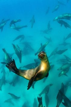 Seal with Seal Friends