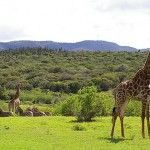 Addo, South Africa – #Travel Guide    Book Hotel in Addo: http://hotels.tourtellus.com/City/Addo_1.htm