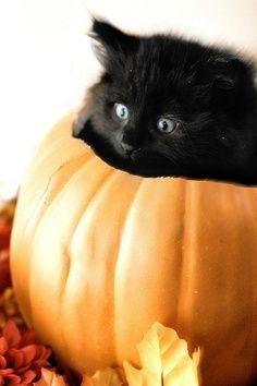 Black kitty in pumpkin!