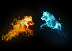 Loup feu et eau