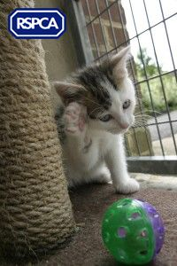 Kitten care – your health questions answered