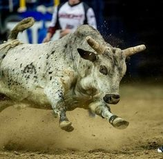 Rodeo Time, Bucking Bulls, Bull Riding, Cowboy And Cowgirl, Nature Animals, Cattle, Goats, Moose Art, Horses