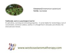Cinnamon EO psychological uses West Coast Aromatherapy