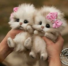 Kittens made from felt Baby Animals Super Cute, Cute Baby Dogs, Cute Stuffed Animals, Cute Dogs And Puppies, Cute Little Animals, Cute Funny Animals, Baby Cats, Baby Animals Pictures, Cute Animal Pictures