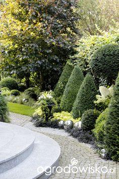 Ogród nie tylko bukszpanowy - część III - strona 2 - Forum ogrodnicze - Ogrodowisko