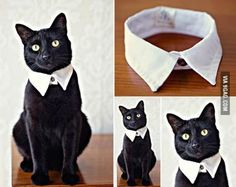 Simple, Easy, Pet Friendly Dog and Cat DIY Costumes