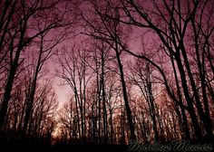Wine Purple Forest Night Sky photograph  fine art by MollysMuses, $18.00