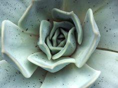Cactus plant close-up macro turquoise aarde roze bloem