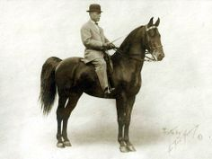A rarely seen George Ford Morris photo of the old Saddlebred star, Chester Peavine, foaled in 1905. He was by Rex Peavine and was out of Miss Madison who was by Chester Dare. His superb daughter, Princess Eugenia, produced the great, great King's Genius! Chester Peavine also sired Margaret Squirrel who produced Judy O'Grady, dam of the great walk-trot world champion, America beautiful, who produced Grandview's Majorette, the dam of Sultan's Santana.