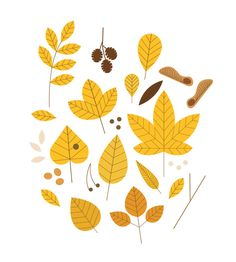 Autumn Leaves - - - - Sarah Abbott - - -