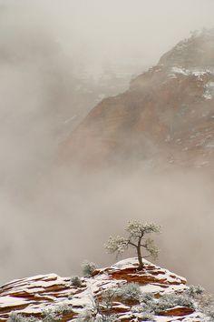 Zion National Park, photo by Igor Menaker