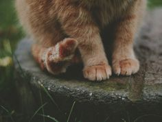 the subtle cat paws