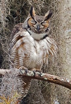 Most current Photos birds of prey owl Ideas For a wild birds associated with feed shooter, a vey important issue most criticize concerning would be the c Owl Photos, Owl Pictures, Beautiful Owl, Animals Beautiful, Beautiful Images, Owl Bird, Pet Birds, Nocturne, Funny Bird
