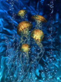 Dennis Mathewson, jellies