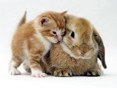 Cute Animals Cuddling