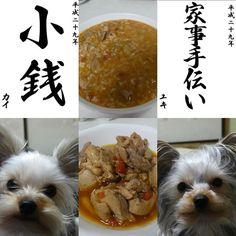 今夜は鶏肉のトマトソース煮と トマトチーズリゾット♪♪ トマト缶の便利さ(///ω///)♪ ふたりの書き初めメーカーU^ェ^U  カイくん『小銭』 ユキちゃん『家事手伝い』  明日東京戻ります(;_;) #yuki#kai#ヨーキー#ヨークシャテリア#ヨークシャーテリア#愛犬#犬#親バカ#家族#多頭飼い#わんこ#犬バカ部#Yorkie#YorkshireTerrier#dog#love#family#広島#呉#地元#hiroshima#kure#犬服#書き初めメーカー#トマトソース煮#リゾット#トマト缶#小銭#家事手伝い