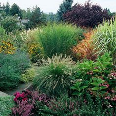 Ornamental grasses mixed with black-eyed susans, lavendar, hydrangea
