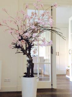 Bloesemboom op echte houten stam. Verkrijgbaar in allerlei soorten en hoogtes. Te bestellen in de webshop van www.annefleurs.nl