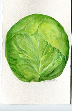 Cabbage Painting watercolor 5 x 7 Original  by SharonFosterArt, $12.50